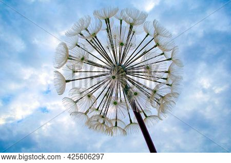 Blue Abstract Dandelion Flower Background, Closeup With Soft Focus. Freedom To Wish. Dandelion Silho
