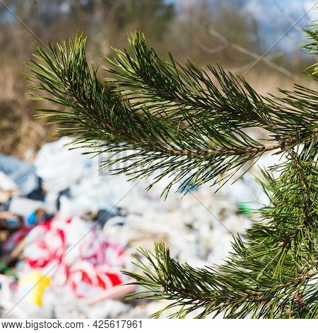 Pile Of Garbage Dump In The Forest. Nature Environment Problems. Polluted Nature Of Forests.
