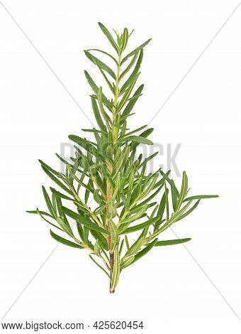 Top View Of Rosemary Isolated On White Backgruond