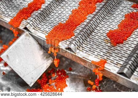 Red Caviar Production Process. Vibrating Tray. The Caviar Flows From The Edge Of The Conveyor Into T