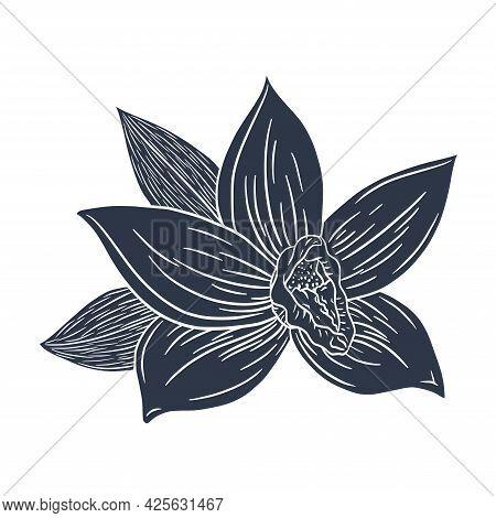 Vanilla Flower Silhouette Engraved Illustration. Line Drawing Vanilla Blossom Isolated Vector Illust