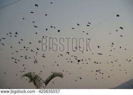 Flying Birds With Sunset. Flying Birds. Birds Silhouettes. Warm Color Nature Background. Mnb