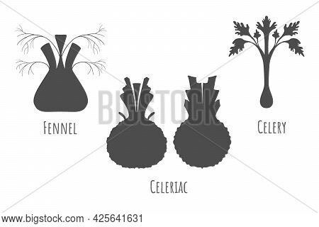 Icons Of The Celeriac, Fennel And Celery