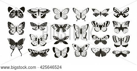 Butterflies Silhouettes. Moth And Butterfly Wings Pattern Laser Cut Outline. Flying Insect Decorativ