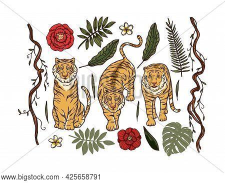 Cartoon Bengal Tiger Animal Vector Jungle Tropical Set. Wildlife Cat Drawing Illustration. Chinese N