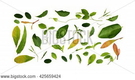 Various Isolated Leaf Lay On White Background. Design For Decoration. Top View. Clean And Minimalist