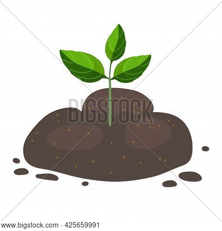 Green Sprout Growing Out From Soil Isolated On White Background. Growing Plant Seeds With Green Leav