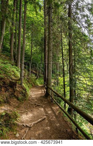 Trail Through Forest. Beautiful Nature Scenery In Summer. Wonderful Sunny Weather. Great Day For A W