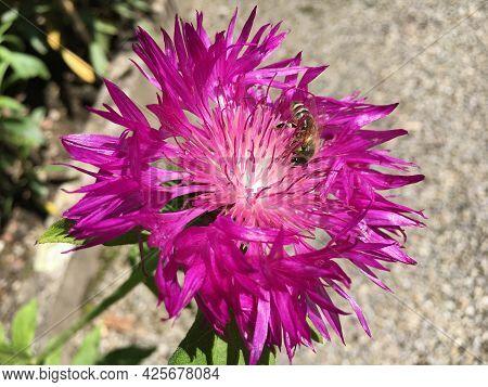 Picturesque Flowers And Exotic Plants In Botanical Garden Saint Gall (malerische Blumen Und Exotisch