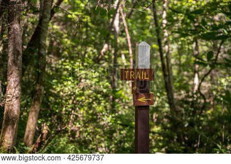 Wooden Signpost Showing The Direction Of The Hiking Trail In A Sunlit Forest Or Wood