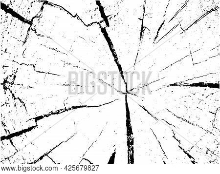 Vector Wood Texture On White Background. Cross Section Of Stump For Background, Illustration, Print,