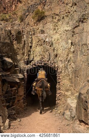Rider Ducks As Mule Enters The Black Bridge Tunnel In Grand Canyon National Park