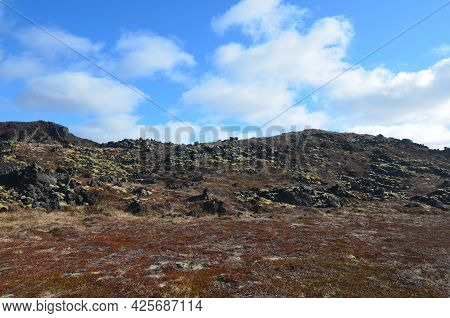 Green Moss Growing On Old Lava Rocks In Iceland.