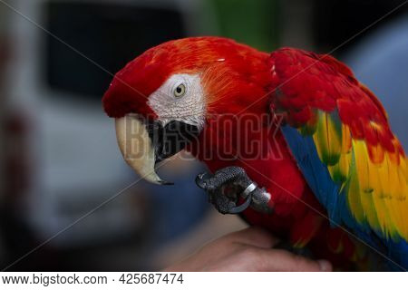Beautiful Colorful Parrot Bird Ahmed Arnaoty 2021 Fly, White, Wildlife, Isolated, Background, Jungle