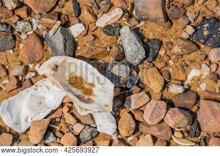 Closeup Of Seashell Laying Among Rocks On Sandy Seashore.