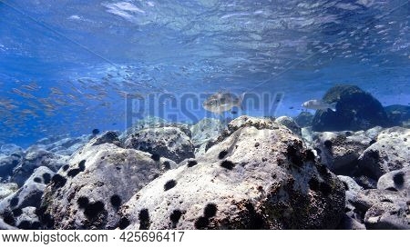 Beautiful Underwater Photo In Blue Light Of Reef And Fish. From A Scuba Dive At The Canary Islands.