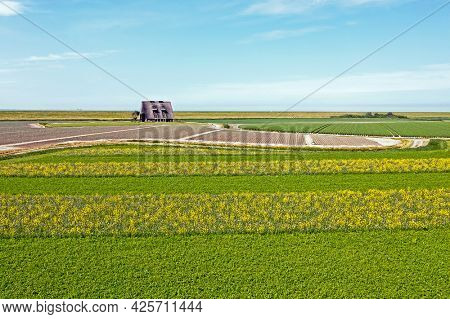 Aerial from rapeseed fields along the dyke in Friesland the Netherlands