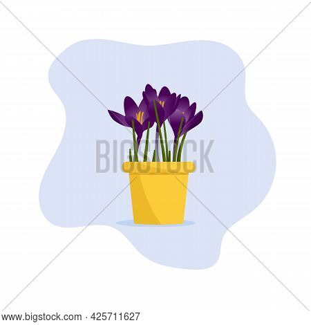 Beautiful Flower In A Pot. Plant In A Pot. Crocus. Flat Vector Illustration