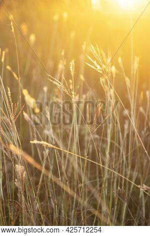 Beautiful Moody Sunset With Meadow Grass In The Foreground