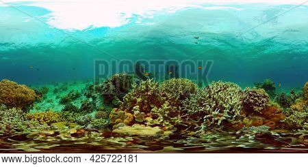 Coral Reef And Tropical Fishes. The Underwater World Of The Philippines. Philippines. 360 Panorama V