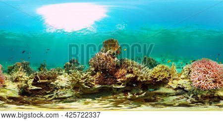 Coral Reef Underwater With Tropical Fish. Hard And Soft Corals, Underwater Landscape. Tropical Under