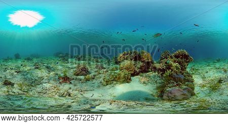 Marine Scuba Diving. Underwater Colorful Tropical Coral Reef Seascape. Philippines. 360 Panorama Vr