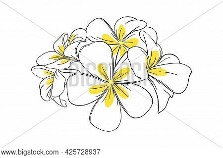 Frangipani Or Plumeria Tropical Flower For Leis. Frangipani With Yellow Petals Isolated In White Bac