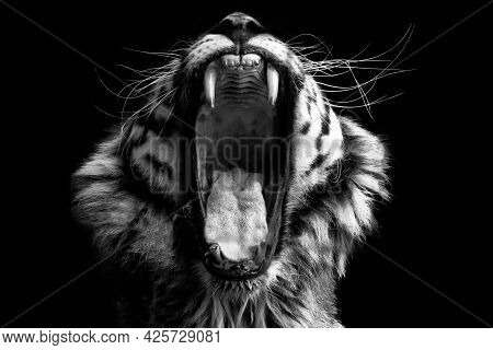 Animal Tiger In The Nature Habitat. Wildlife Scene With Danger Animal Tiger.