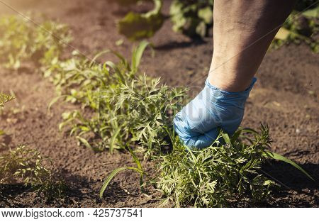 Hand In Working Gloves During Weeds Removal Over Green Field With Soil In Summer.