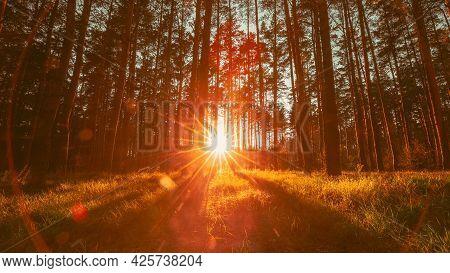 Beautiful Sunset Sunrise Sun Sunshine In Sunny Autumn Coniferous Forest. Sunlight Sunbeams Through W