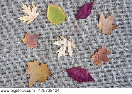 Dry Leaves Of Various Shapes And Colors On Gray Burlap. Autumn Composition, Herbarium. Top View. Fla