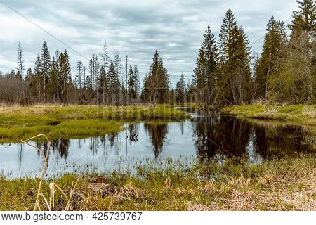 Quiet Scene With A River In Early Spring In The Forest. Staycation Travel Concept. Cloudy Weather