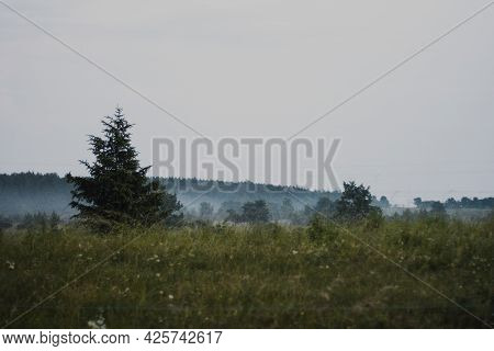 Beautiful Summer Landscape With A Green Grass Field Covered With Fog. Forest In The Distance On The