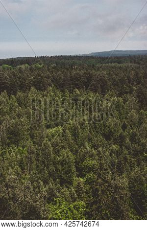 Misty Forest In Foggy Morning. Far Horizon. Spruce And Pine Tree Forest Abstract Texture Background