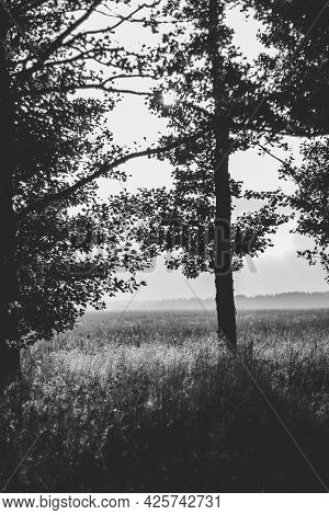 Monochrome Photography With A Tree Silhouette Against The Sky In A Meadow Covered With Fog.