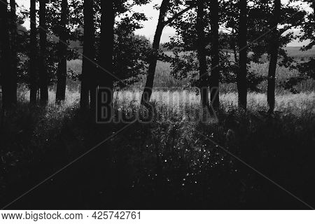 Beautiful Meadow With Reeds, Which Is Illuminated By Golden Sunlight At Sunset. Tree Silhouettes In