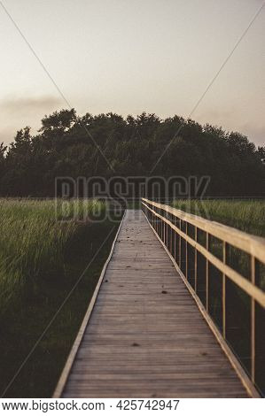 Pedestrian Tourist Wooden Walking Trail In The Swamp With Wooden Protective Barriers. Meadow With Lo