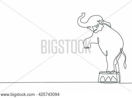 Single One Line Drawing Of An Elephant Stands On A Circus Chair With Its Forelegs Raised. Very Good