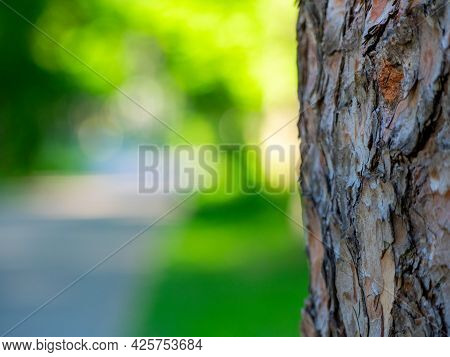 A Tree Trunk And A Blurry Green Background. Selective Focus, Bark Texture, Copy Space