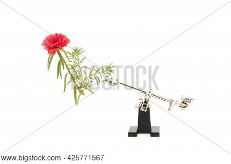 Photograph Showing A Type Of Setup Used To Shoot Macro Flower Photography.