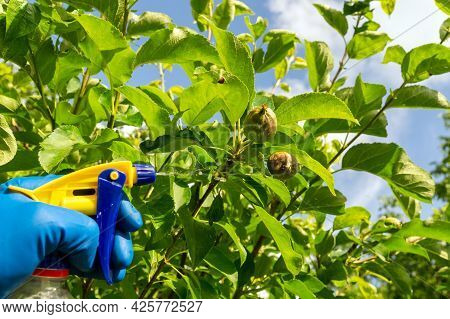 Treatment Of Apple Tree Branches In Summer With A Fungicide Against Pests Or Bacterial Diseases. Spr