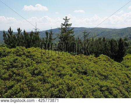 Green Silesian Beskids Mountains Range Near European Salmopol Pass In Poland, Clear Blue Sky In 2021