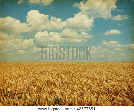 Texture of old paper. field of wheat with sunflowers