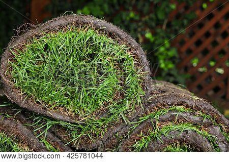 Closeup View Of Grass Sod Rolls On Backyard