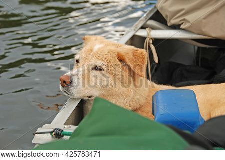 A Dog's Life On A Canoe Trip In The Boundary Waters In Minnesota