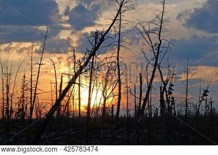 Sunset Through A Fire Devastated Landscape On Alpine Lake In The Boundary Waters In Minnesota