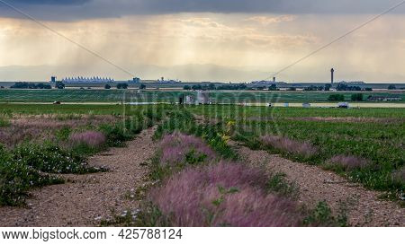 Agricultural Landscape With A Dirt Road And Herbal Flowers In The Prairie Of Eastern Colorado. The S