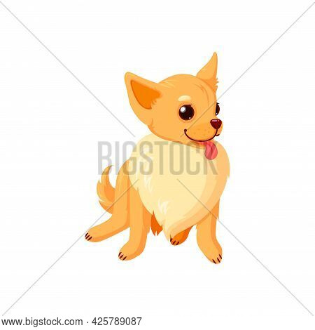 Sitting Chihuahua Pet With Tongue. Purebreed Dog Companion Isolated In White Background. Vector Illu