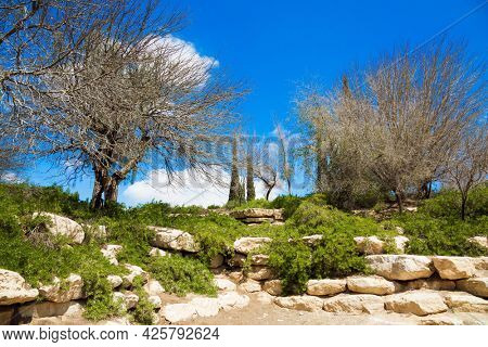 Small picturesque park on a hill around the Ben Gurion Memorial. Israel. Early spring. There are no leaves on the trees