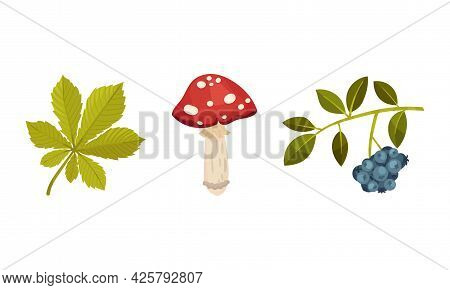 Toadstool With Red Cap And Berry Twig As Forest Botany Element Vector Set